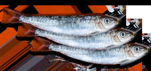 La sardine de La Marine - René Montaner